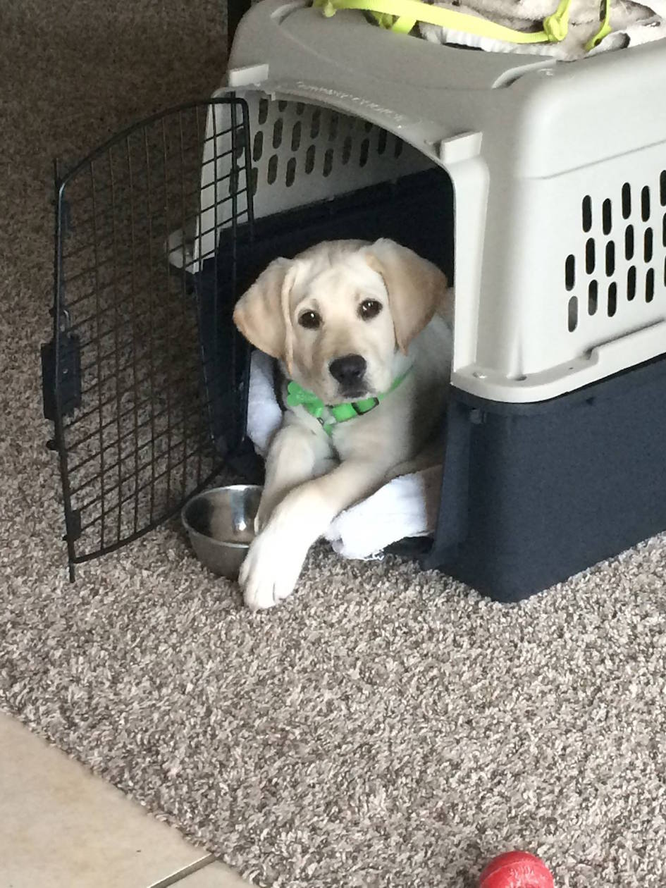 photo puppy in crate