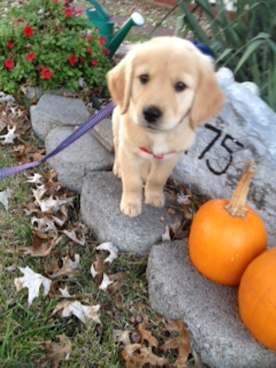 photo puppy and pumpkins